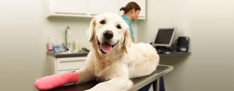 What Customers Reviews Say About Healthy Paws Pet Insurance
