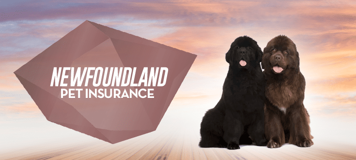 newfoundland pet insurance