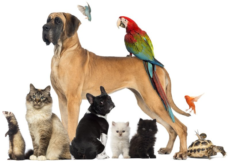 pet insurance is it worth it what does it cover
