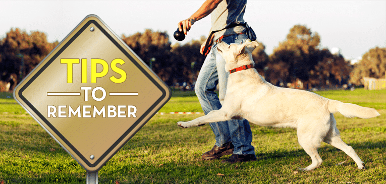dog training tips to remember