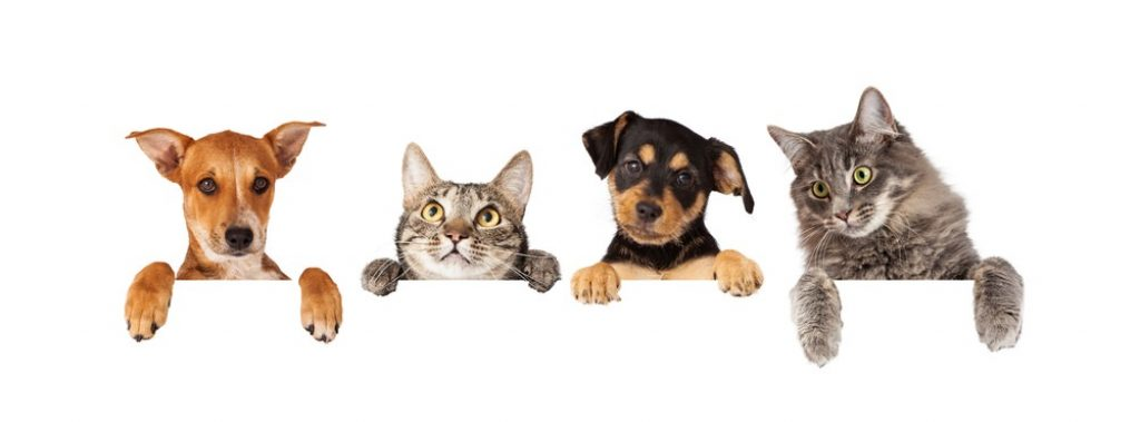 healthy paws vs nationwide pet insurance